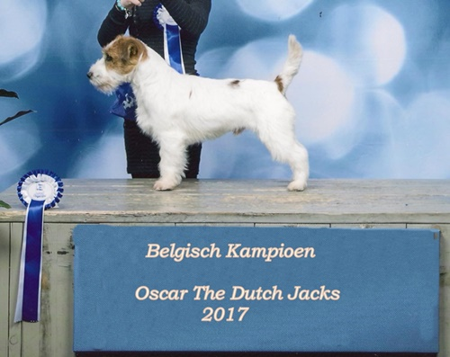 Show Genk Lynn Oscar THe Dutch Jacks